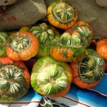 """gourds"" by candicecruzphotography"