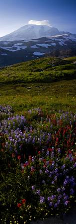 Flowers below Mt. Rainier