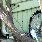 """Blue Jay and Bicycle Wheel"" by artistfaye"