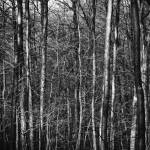 """Woods in Winter, Westchester"" by tomharrisonphotography"