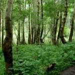 """""""Aspen Woods"""" by Kell24"""