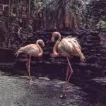 """Flamingo"" by EnjoyART"