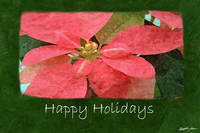 Pink Poinsettias 5 - Happy Holidays