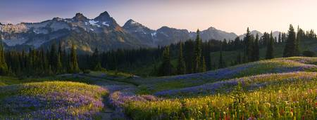 Tatoosh Sunset from Mazama Ridge