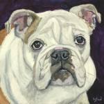 """""""Lola - an English Bulldog"""" by kelliestraw"""