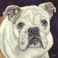 Lola - an English Bulldog
