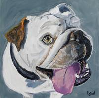 Jackson's Grin - an English Bulldog