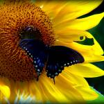 """""""Butterfly and Bee"""" by ashnape93"""