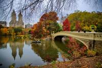 Autmnal wonder within Central Park, NYC