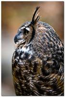 25183 - Great Horned Owl