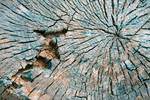 """Abstract Tree Cut by James """"BO"""" Insogna"""