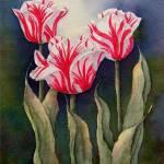 """""""Tulip Trio"""" by carolcourictribou"""