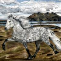 Charismatic ~ Icelandic horse Art Prints & Posters by Shari Nees
