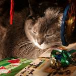 """merry cat"" by phototes"