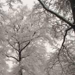 """A Cold Winter"" by myeye"