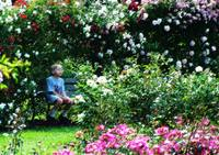 The Boy in the Rose Garden