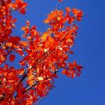 """""""Fall on me II"""" by digitalVerve"""