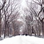 """Central Park Mall in the Winter"" by PabloPimienta"