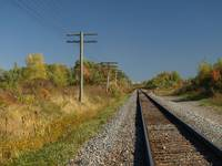 train tracks in autumn colors