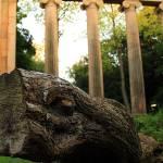 """Wood"" by Sohaib-Khan"