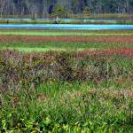 """Marshland Colors"" by shelshots"