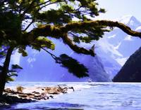 Milford Sound No1