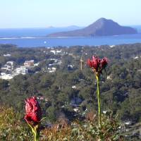 """Lily Road Look out Nelson Bay"" by Adrianne Wood"