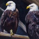 """American Eagles"" by ACastelli"