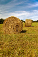 Round hay bales in the sun