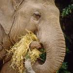 """Elephant Animal Snack Time"" by kphotos"