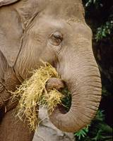 Elephant Animal Snack Time