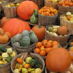 """Pumpkins and Gourds"" by bluejean"