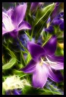 Ethereal Purple Lilies