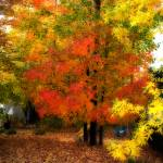 """""""Almost Autumn"""" by JasonMayoff"""