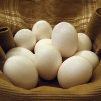 Eggs-in-a-Basket by Patricia Schnepf