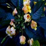 """Small Flowers"" by patriciaschnepf"