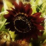 """The Softness of Autumn"" by RCdeWinter"