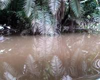 Rainforest Reflection