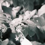 """Busy Bee"" by kreinhardt"