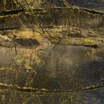 """Heron at North Cascades Pond"" by JimDockery"