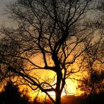 """Tree at sunset _1668"" by davies"