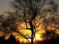 Tree at sunset _1668