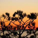 """Sunset tree_4568"" by davies"
