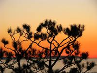 Sunset tree_4568