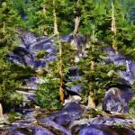 """Trees in Granite Hillside"" by johncorney"