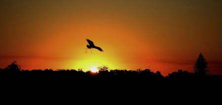 Eagle Sunset