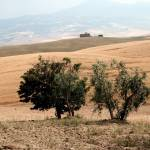 """Tuscan landscape"" by Lephotophil"