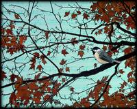 chickadee in autumn