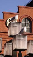 seagulls at the inner harbor