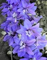 Purple frilly flowers